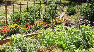 Jardineria ecol gica for Jardineria ecologica